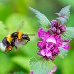 2 bee on flower