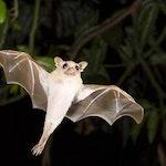Batty About Bats Card