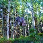 Bear Bag Camping