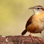 Beautiful Birds Hero