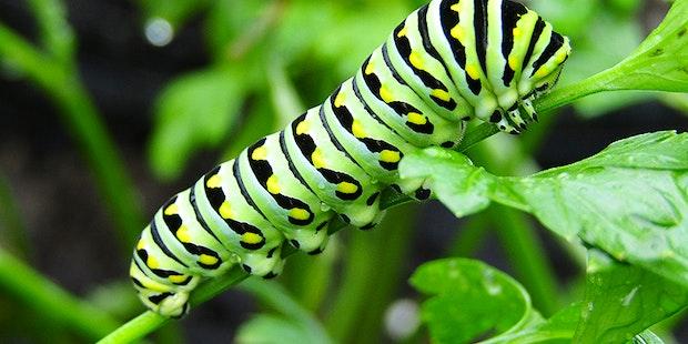 Caterpillar 800X600