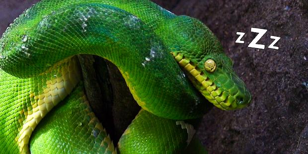 Dp Snake Still