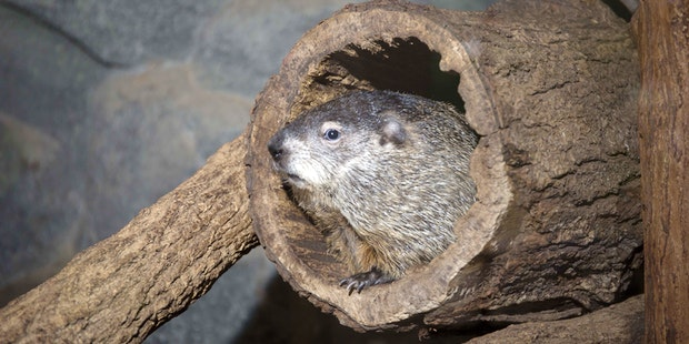 Dpn Creature Cavern Groundhog
