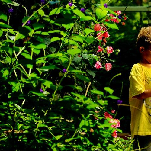 Dpn Butterfly Pav Boy