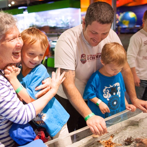 Dps Touch Tank Family