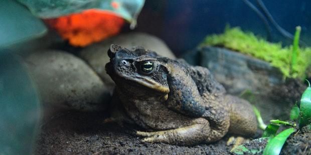 Frogs Header