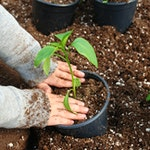 Gardening Summer Slide Dpn