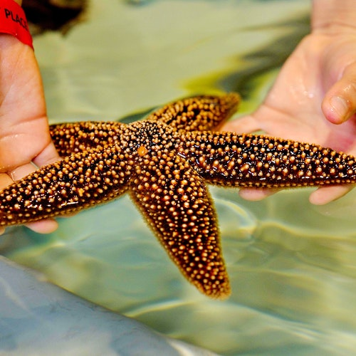 Labs Eml Starfish Copy