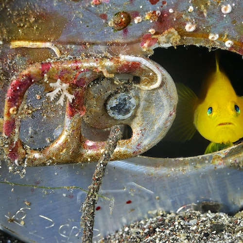 MM7576_080926__012234 Brian-Skerry