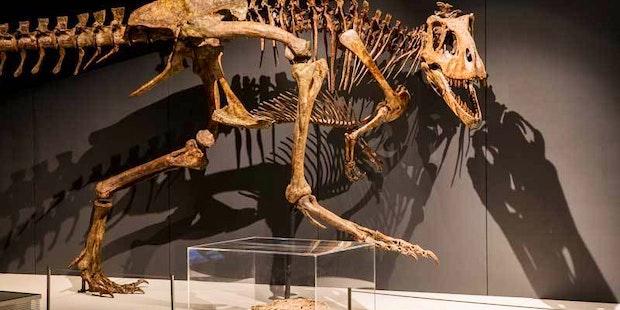 Tyrannosaurs 053