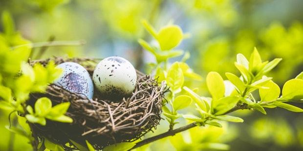Birds nest eggs
