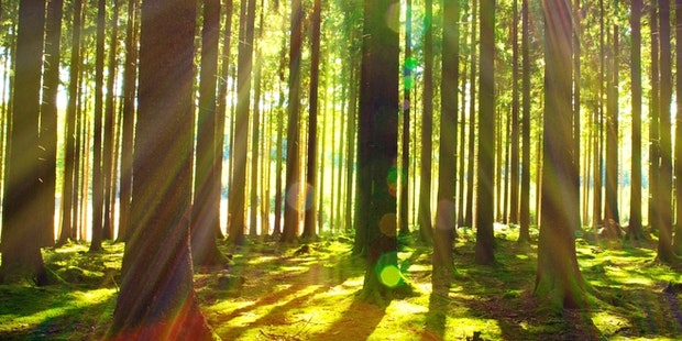 Forest trees mindfullness
