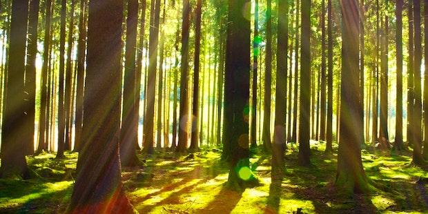 Forest trees mindfullness