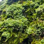 Lichens forest