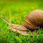 snail_01