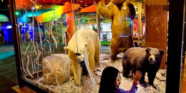 World alive bears