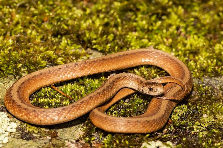 4 brown snake shutterstock 1080580478 1