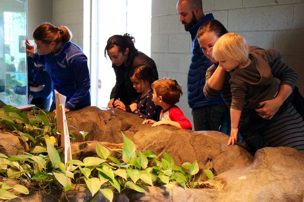 Dpn Creature Cavern Turtle Habitat