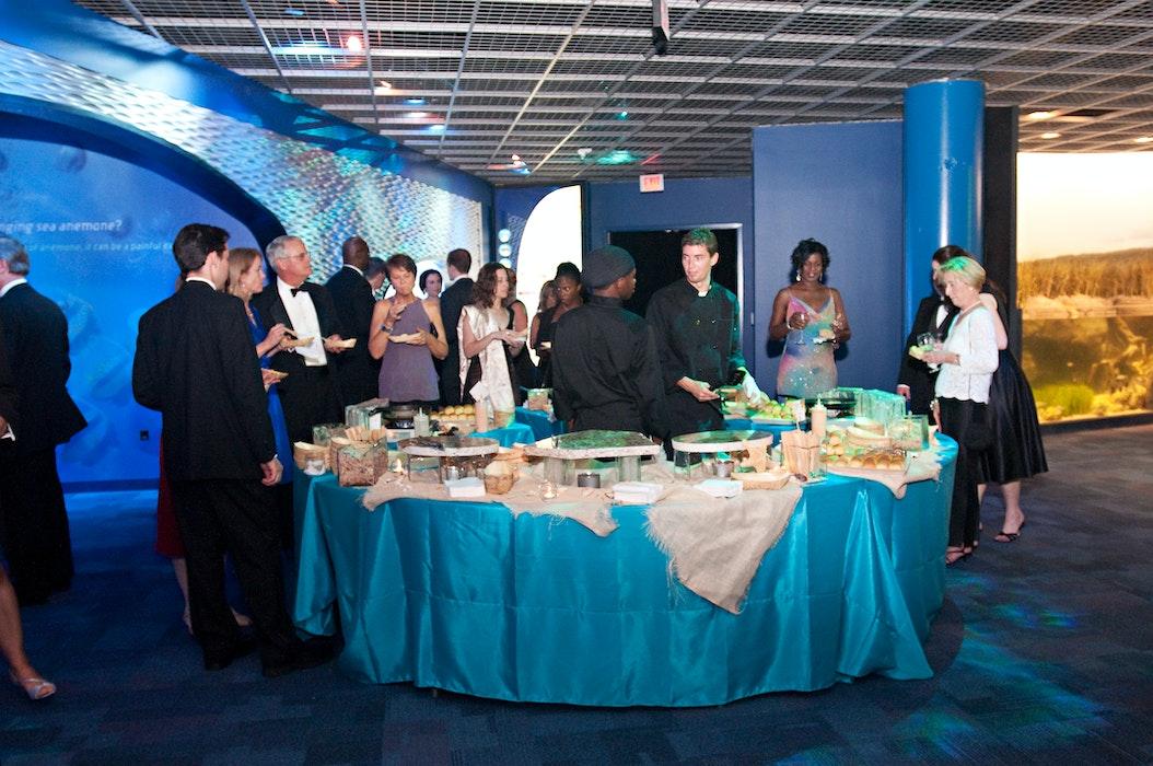 Dsc 9035 Food In Aquarium