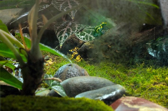 MG Frog Habitat 03