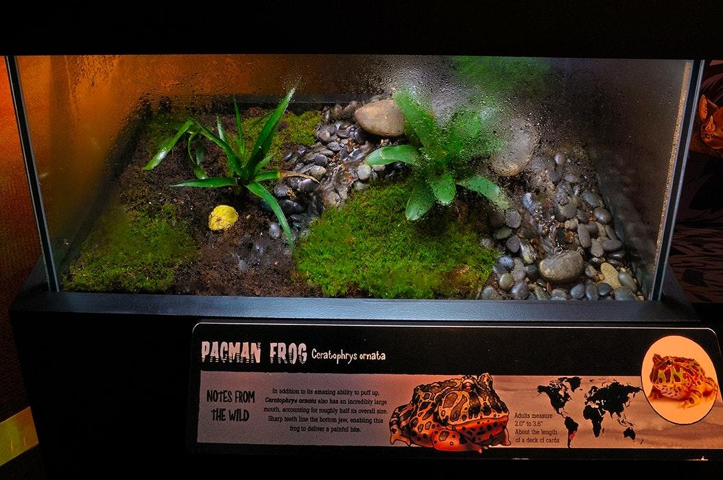 MG Frog Habitat 04