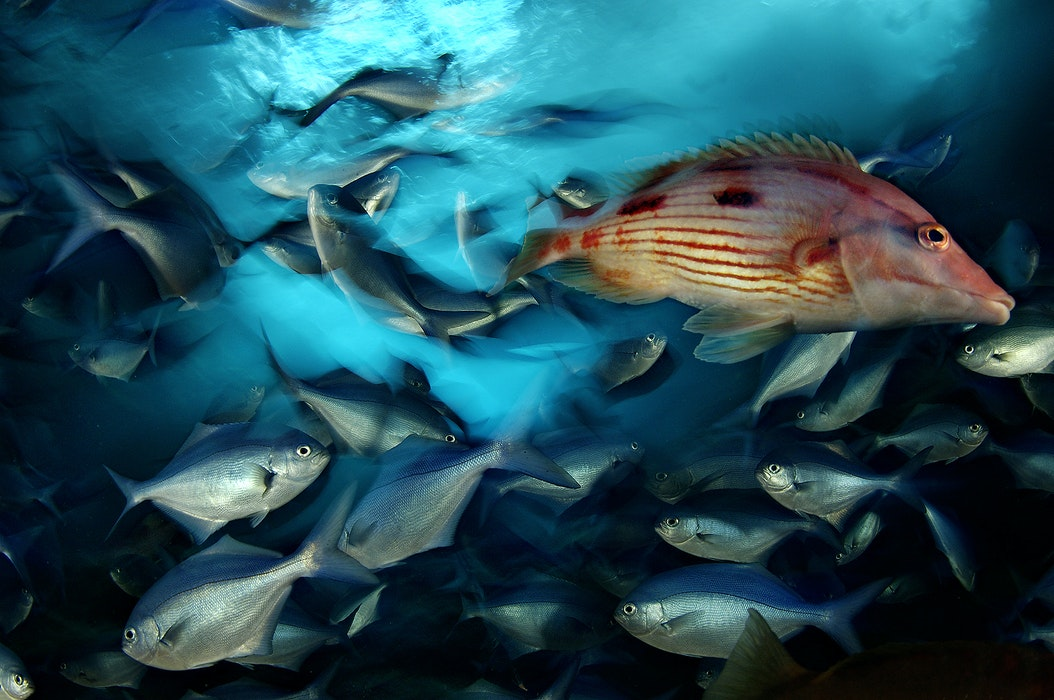 MM7396_060323_06375_CR-Brian-Skerry