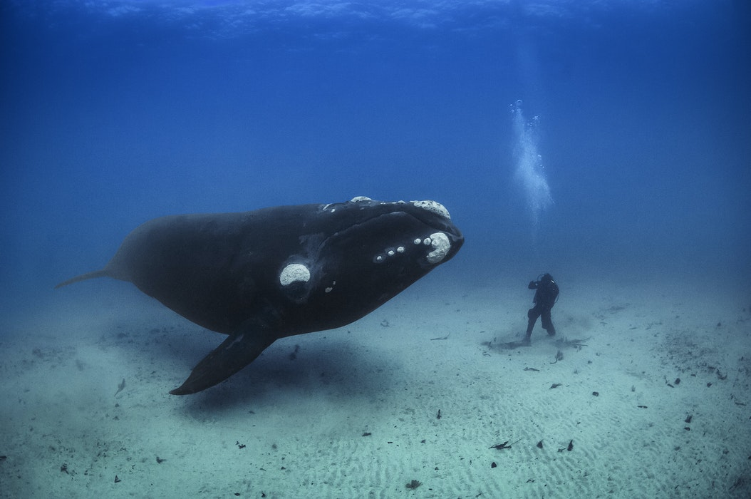 MM7464_070727__013227-Rev.F2_CR-Brian-Skerry