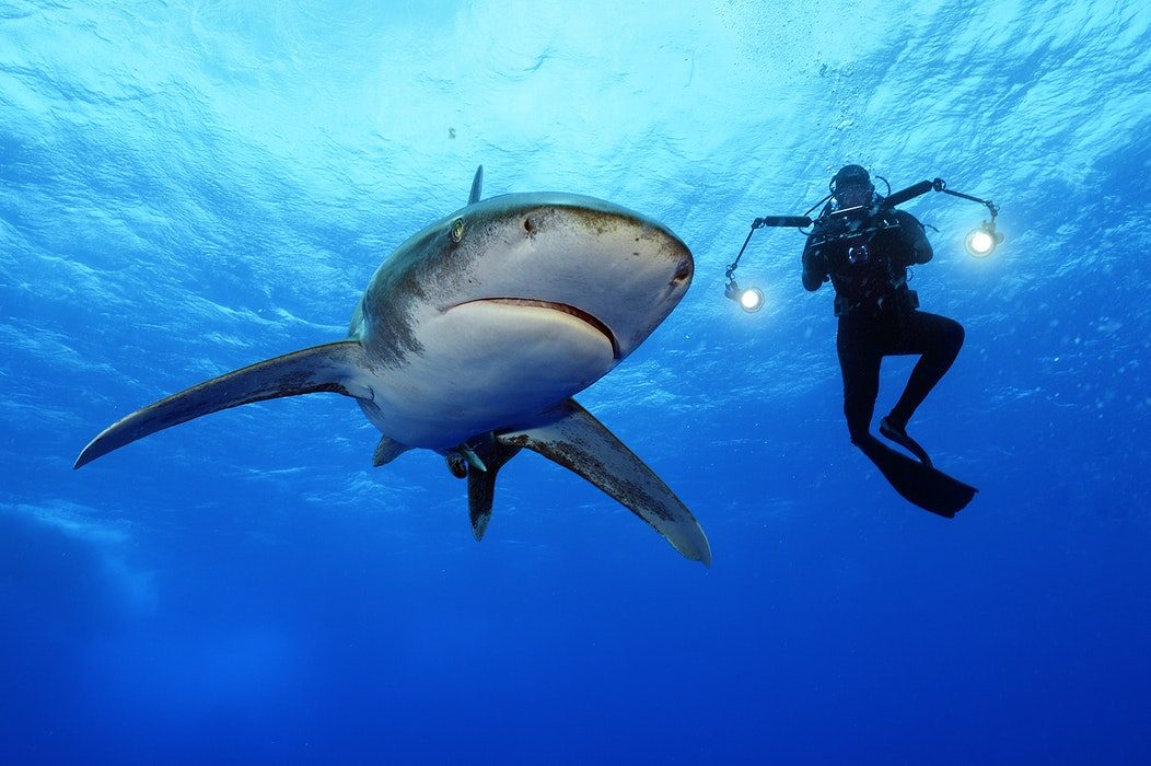 MM8288_140514_00251_CR-Brian-Skerry