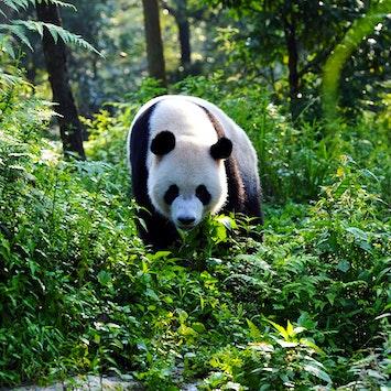 Pandas-Email