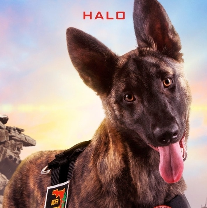 Superpower Dogs Halo Square