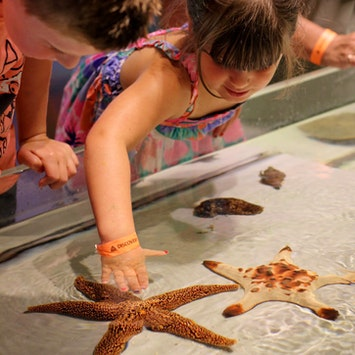 Touch Tank Inset