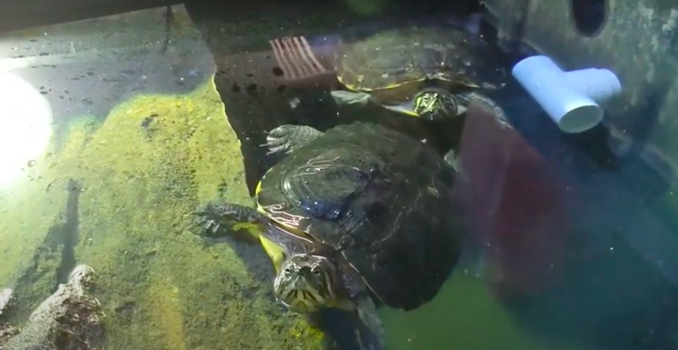 YT Terrific Turtles